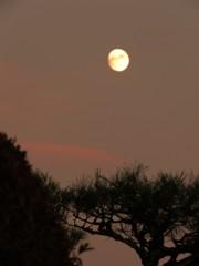 昨日の夕方の月