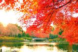 秋の中央公園2