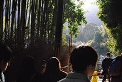 竹林の小径〜嵐山〜