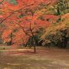 京都-奈良~紅葉~