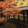 京都-奈良~紅葉の通路~