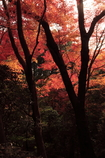 京都-奈良~紅葉と樹木~
