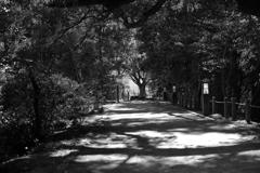 散歩の小道