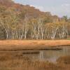 尾瀬~紅葉と湿原~
