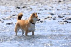 川遊びの季節