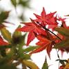 秋のはじまり