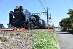 彼岸花と蒸気機関車