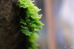 伸びゆく苔