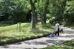 木漏れ日掃除