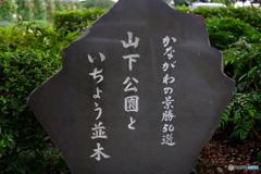 Yokohama Snapshot U