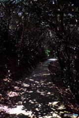 佐田岬 木漏れ日のトンネル