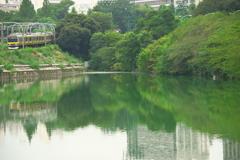 首都の緑映