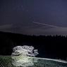 諸木野の夜桜^^