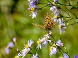 畑の蝶チョ