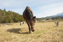 お馬さんです。