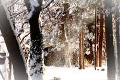 小雪舞い散る