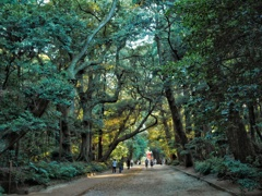 茨城県 鹿島神宮内 森林回廊