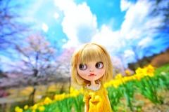 水仙の花の咲く丘#5