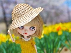 水仙の花の咲く丘#1