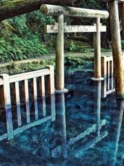 茨城県 鹿島神宮 御手洗池