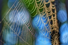 Art of spider web