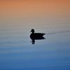 ウトナイ湖のマジックアワー