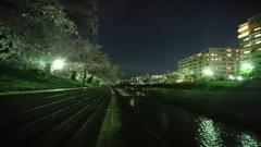 友と語りし夜桜の風景。