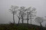 霧の樹林。