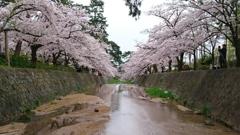 日本桜の名所百選。