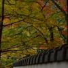 秋を探して。