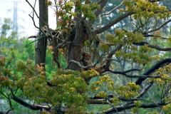 木の上のチーター