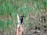 昔撮った鳥さん
