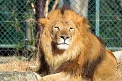 千葉市動物公園のトウヤ