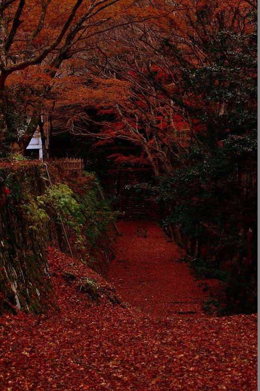 赤く染まった一筋の道