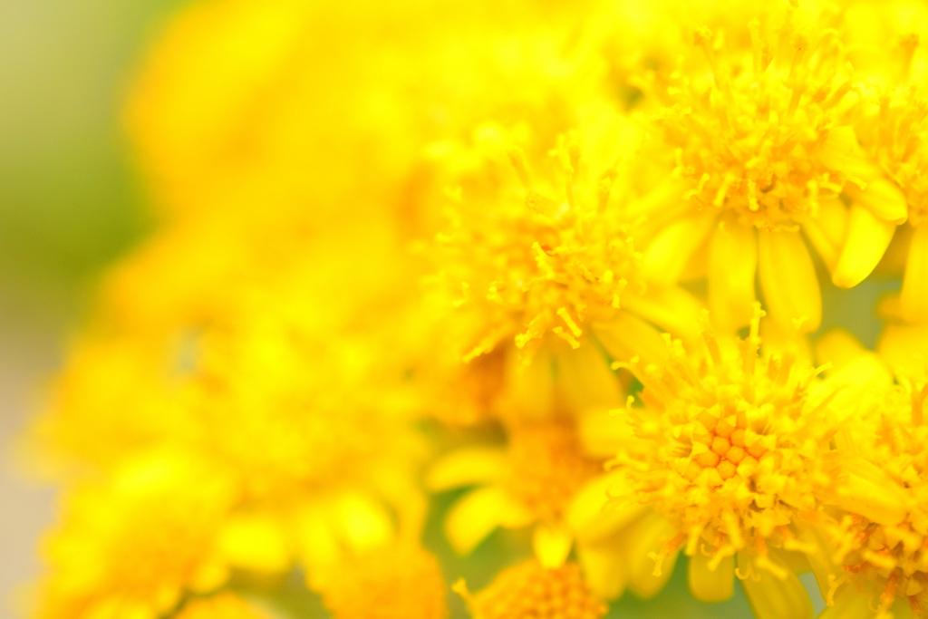 黄色の世界②