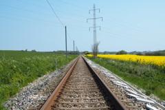 菜の花畑と線路