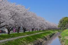 桜満開の季節