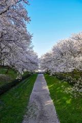 小川に流れる春の花びら