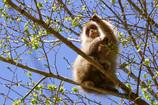 お猿さん ただいま食事中