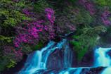 渓谷を彩る