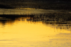 金色の朝日