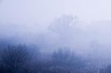 霧降る朝に