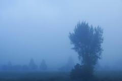 誰もいない霧の海