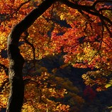 秋彩うつろい