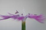 花 キューピット