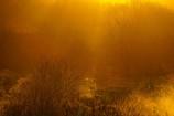 荒野への希望の光