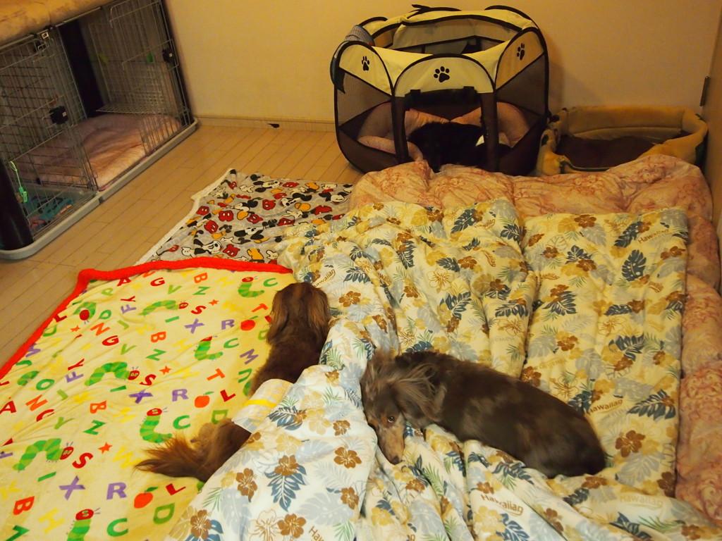 床暖房と羽毛布団でお留守番