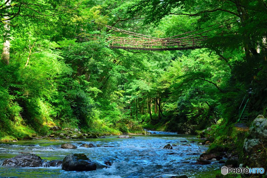かずら橋の夏