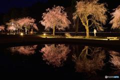 竹田しだれ桜まつり ライトアップ