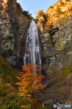 大滝と一本の木と